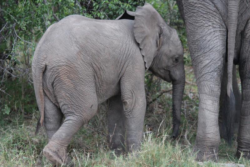 Africa Trip 2012 356.jpg