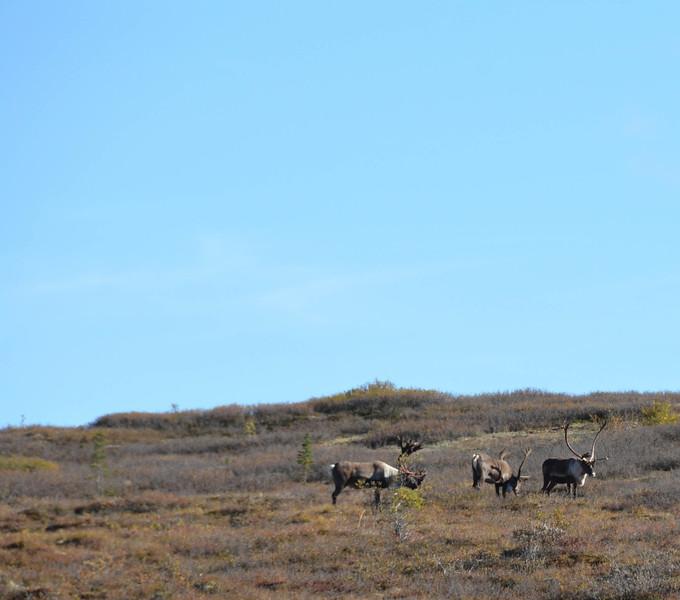 Denali-National-Park-159.jpg