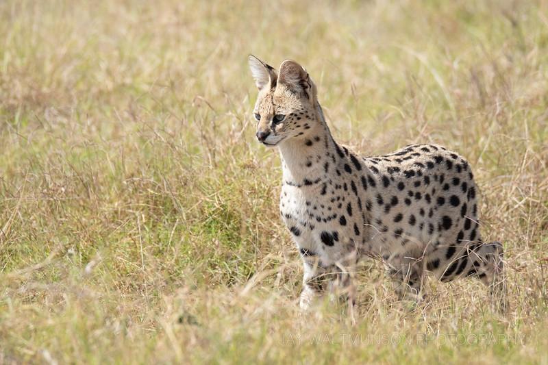 Jay Waltmunson Photography - Kenya 2019 - 156 - (DSCF4468).jpg