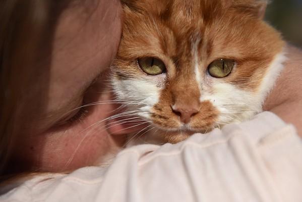 Juliet the Cat
