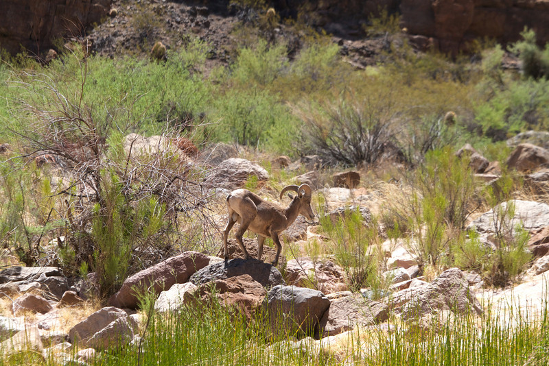 2014_Grand_Canyon_WHDW2_7D 52