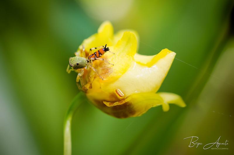 _DSC4639-Baby Spider.jpg