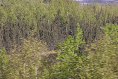 Alaskan Safari & Cruise 2017
