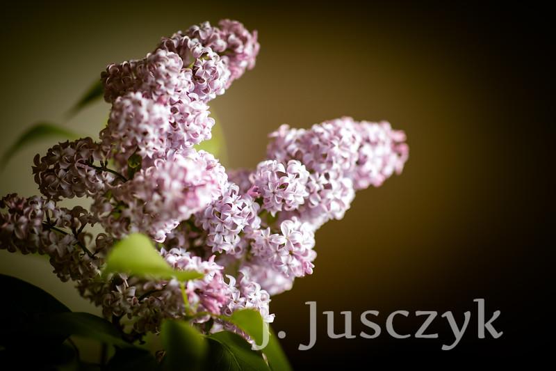 Jusczyk2021-9681.jpg