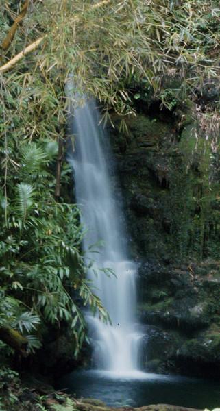 106- 20080409- Hawaii 15- Enroute to Hilo- Off-road Waterfalls DSC_2610.jpg