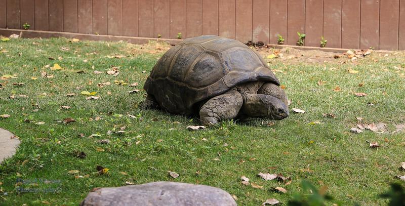 2016-07-17 Fort Wayne Zoo 1014LR.jpg