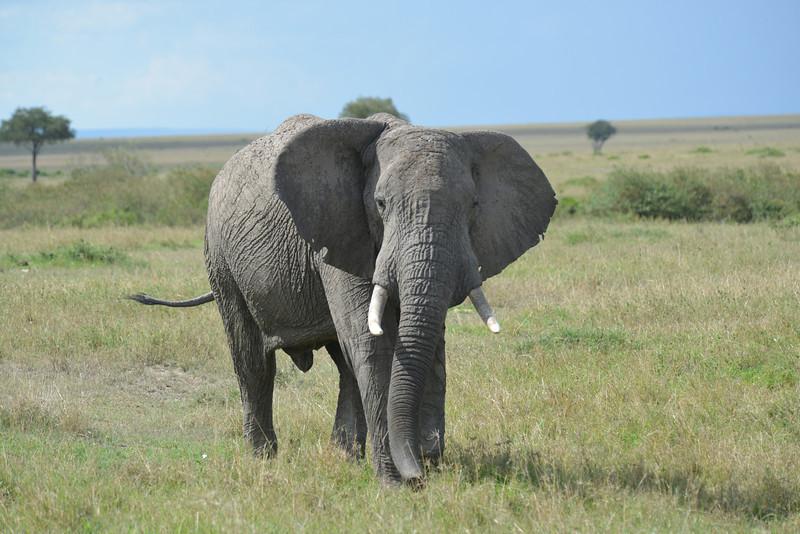 East Africa Safari 240.jpg