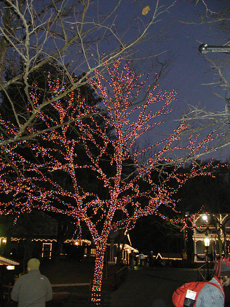 colored lights tree.jpg