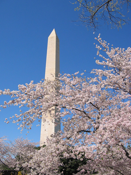 2009_04 Cherry Blossom Festival