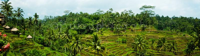 Bali Feb 2014 (34 of 319).jpg