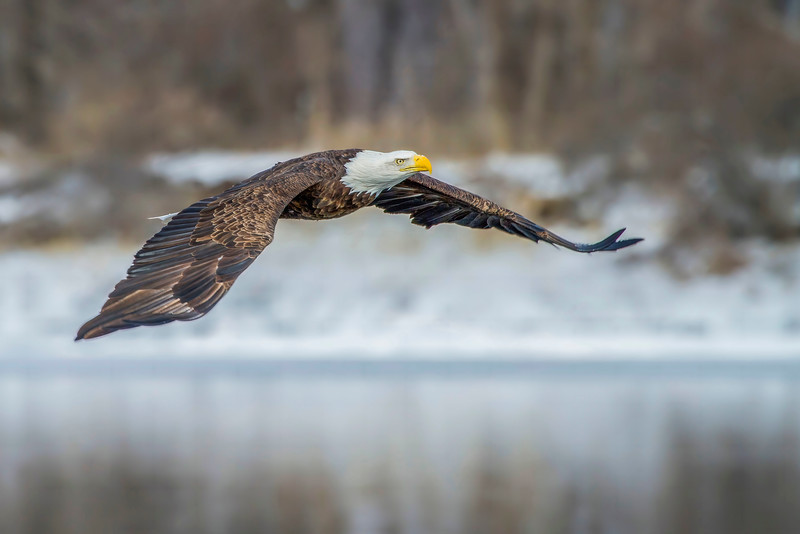 smug eagle red.jpg