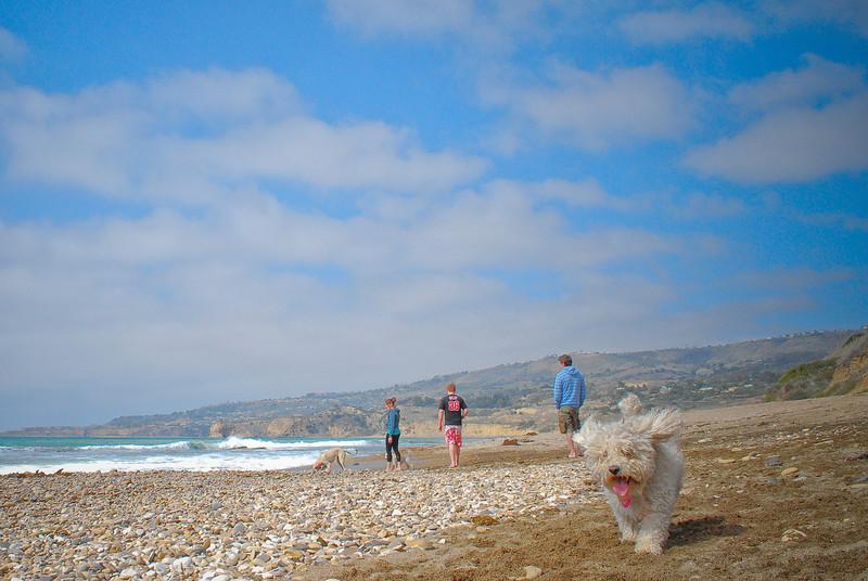 dogs_beach-081.jpg