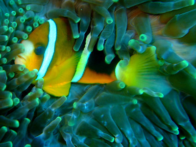 Nusa Lembongan Diving