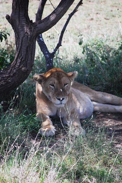 Serengeti (177).JPG