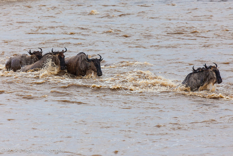 North_Serengeti-53.jpg
