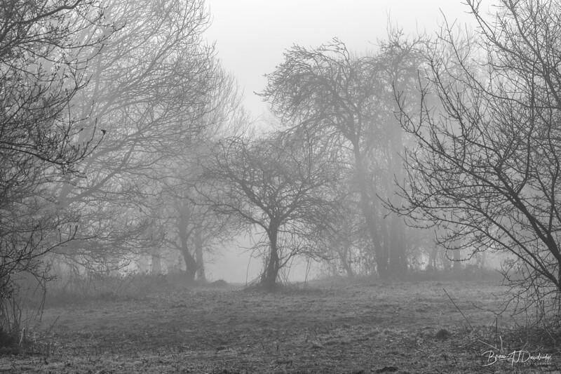 Misty Morning-19.jpg