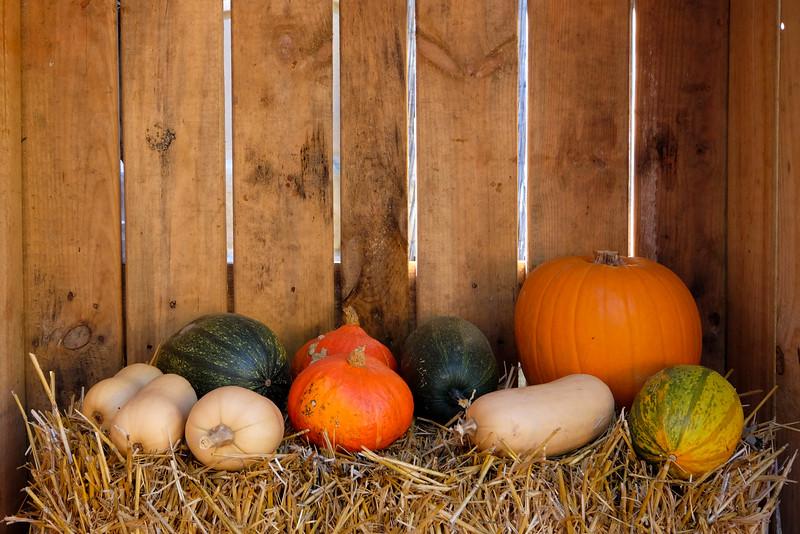 Ludwigsburg_Pumpkin_151003_002.jpg