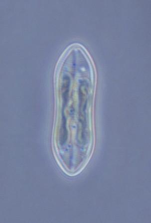 Arctic 2016 - Phytoplankton species