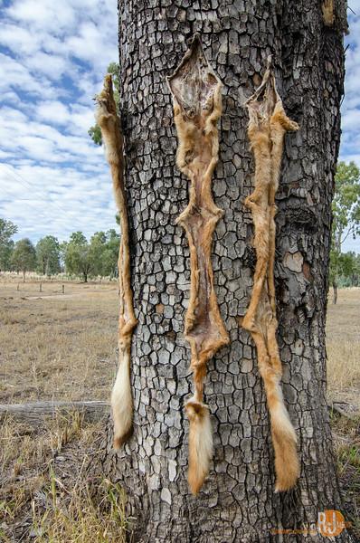 Australia-queensland-charleville-outback-3848.jpg