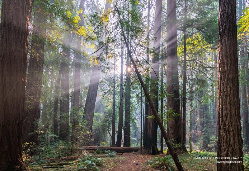 Muir Woods-7132.jpg