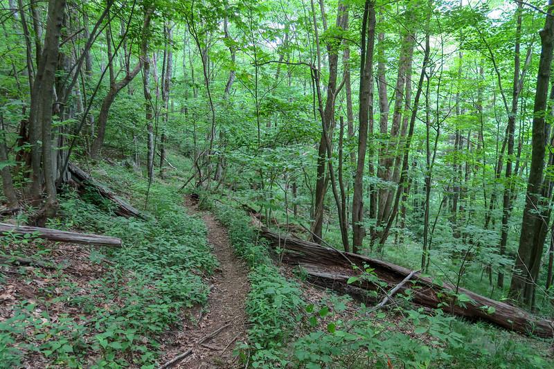 Greasy Cove Trail -- 4,700'