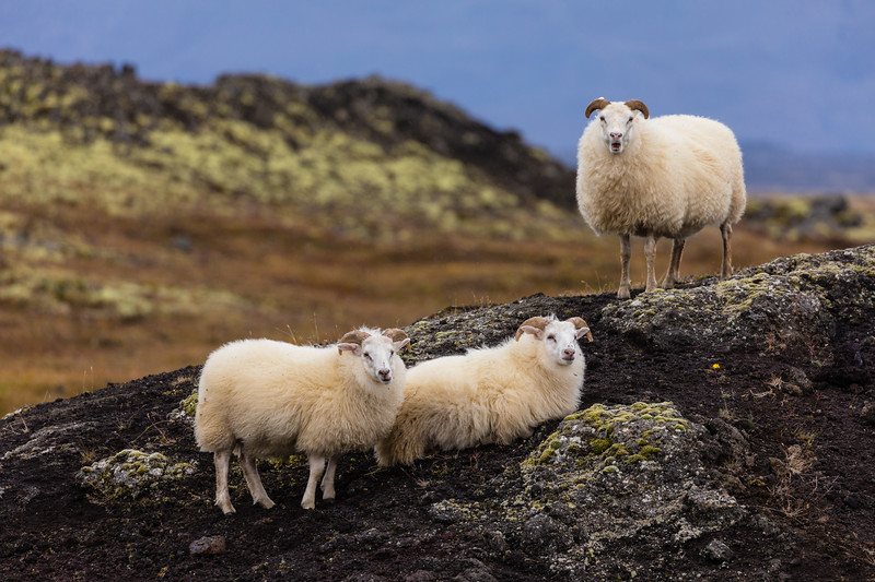 Iceland19_-3074.jpg