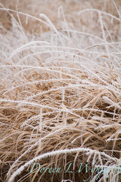 Winter frost roadside weed_9419.jpg