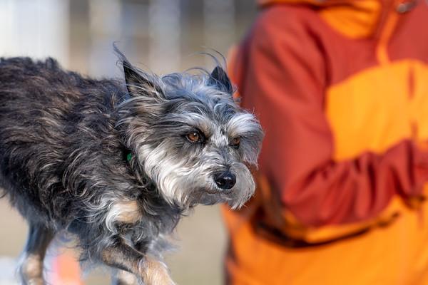 Terrier2