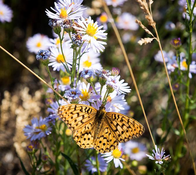 Butterfly 32.jpg
