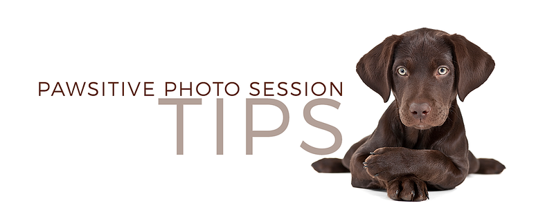 pawsitive photo session tips banner lab  .png