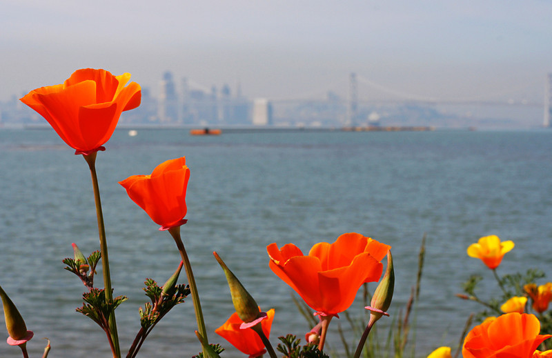 0005 Poppies & SF 2.jpg