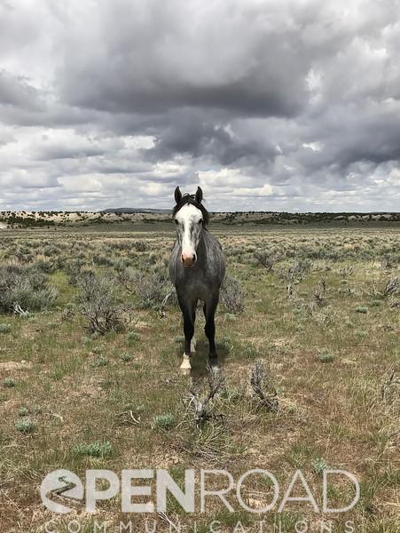 Wild horses in Colorado