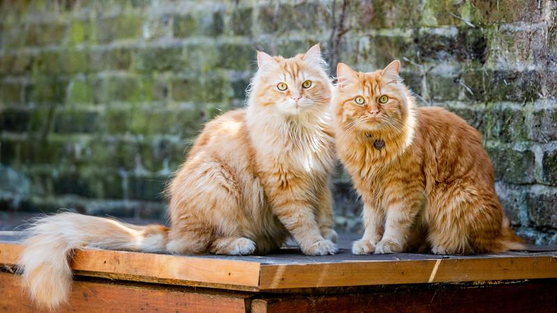 Alan and Ron-93.jpg