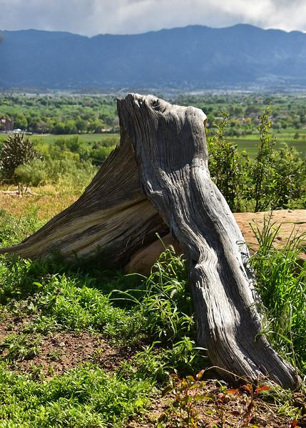 NEA_4386-5x7-Stump.jpg