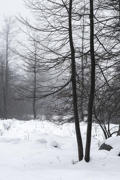 Fog and Snow