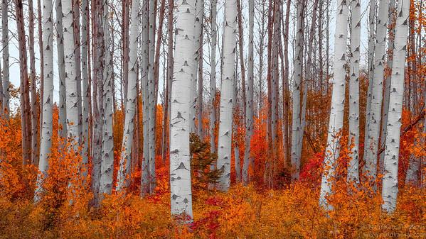 Northern Cascades