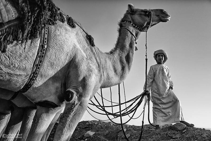 FE2A3516-4copy-camels- B&W.jpg