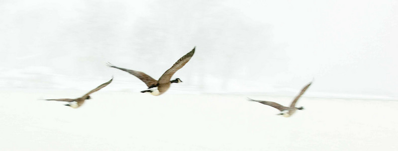 FlyingCanadas2.jpg