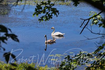 Russell Bird Sanctuary/Bluebird Hill