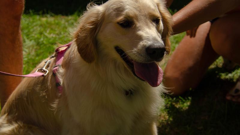 PuppyParty18-306.jpg