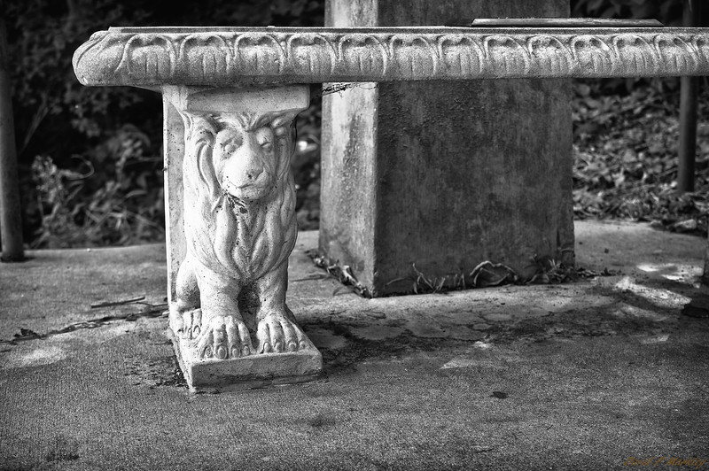 Lion Leg