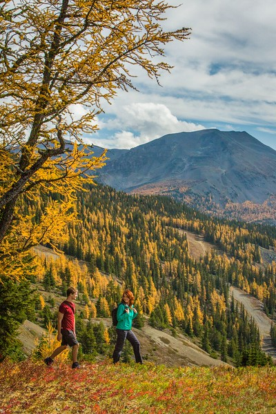 Hikers on a colorful trail during a fall hike in the Canadian Rockies.