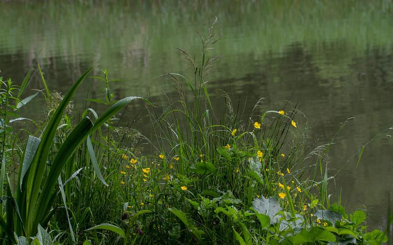 Planter på elvebredden / Plants at riverside