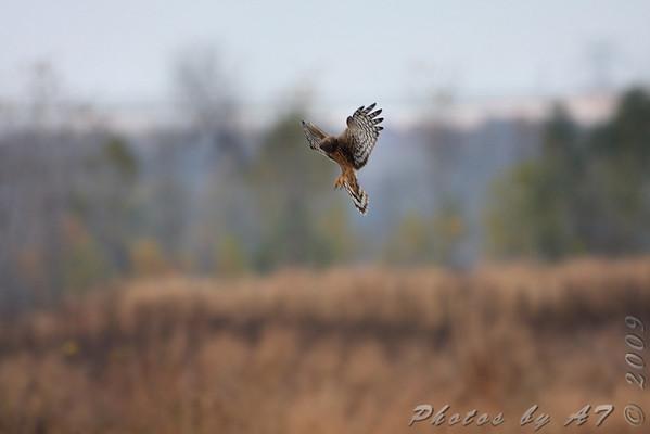 2009-10-28 Riverlands Migratory Bird Sanctuary