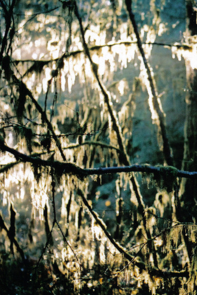 Hoh Rain Forest, Washington November 2003