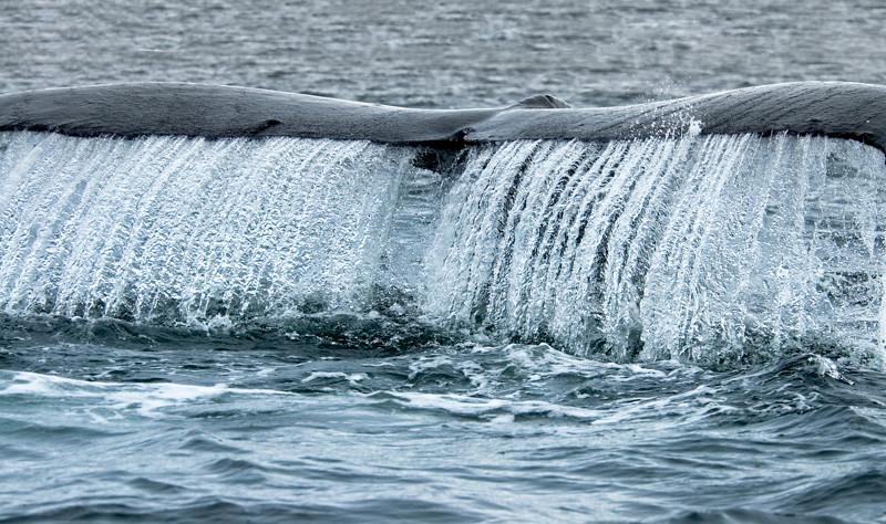 AK_Whales-3.jpg