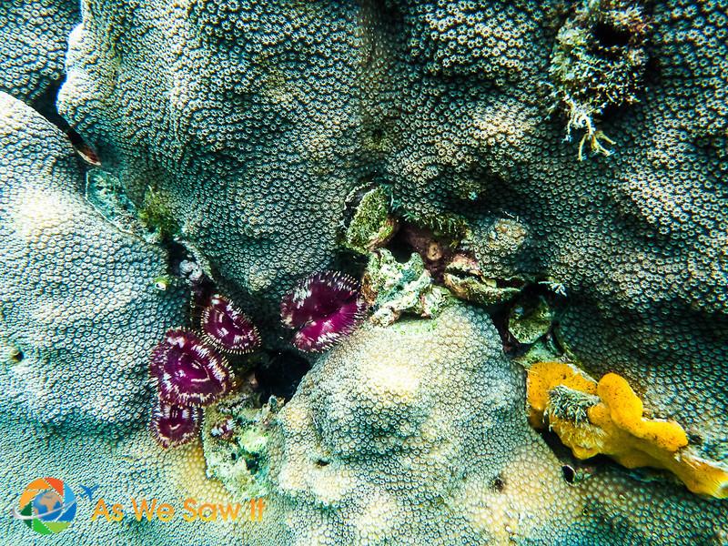 Under-Bocas-Del-Toro-1010235.jpg