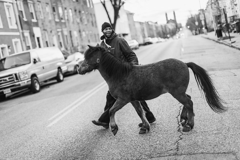 Baltimore -- Gready notices Bey has gained some weight for the winter. It's a good sign for the young pony. Taken on Nov. 28, 2018.