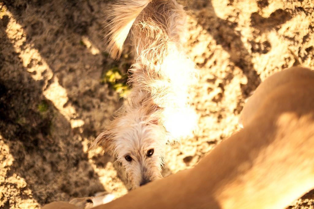 Dogsonbeach-AlexanderGardner-0015-20100614