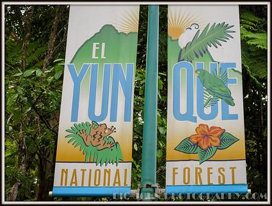 El Yunque National Rain Forest Puerto Rico 2015